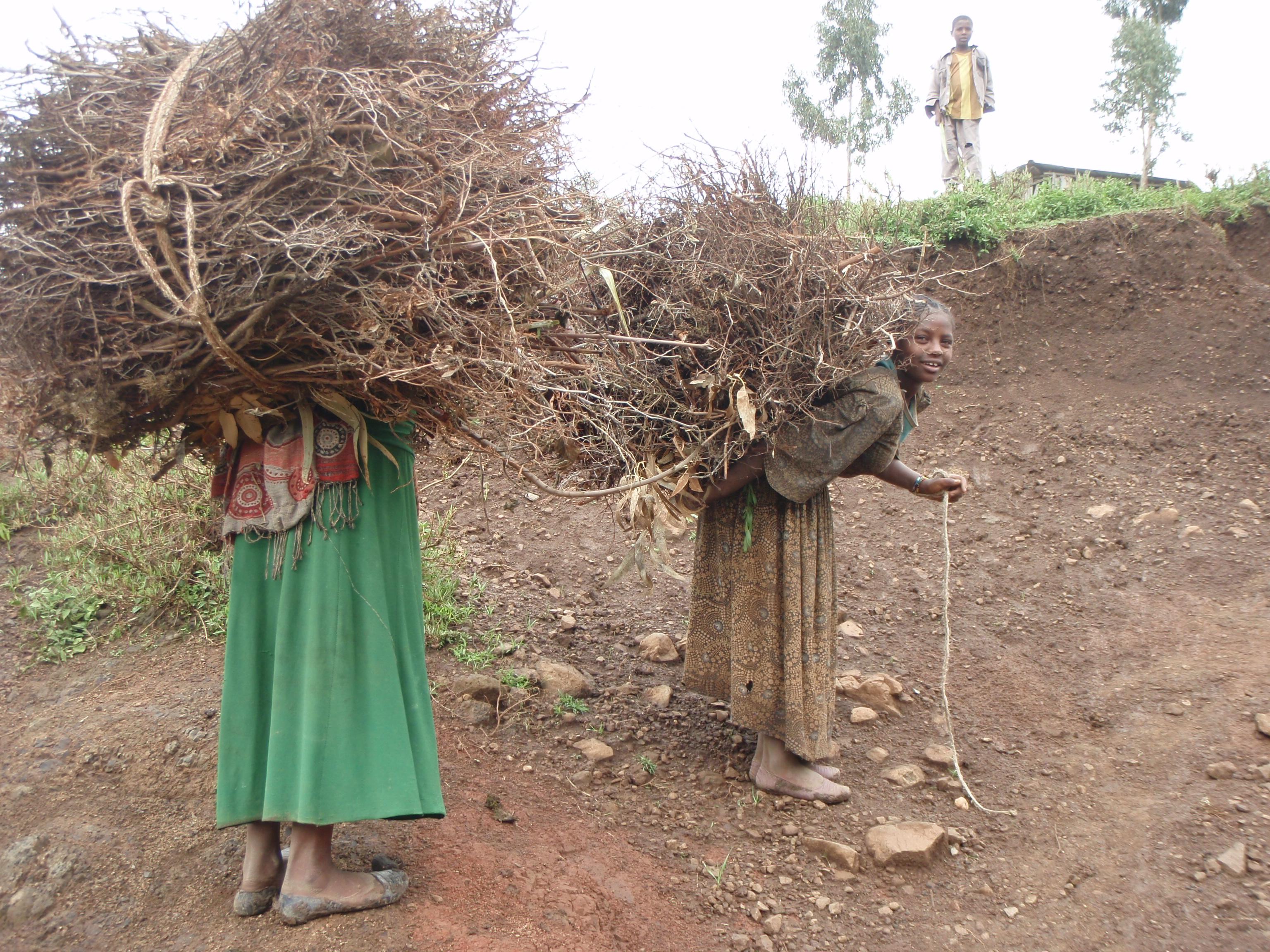 自然資源に依存している生活燃料(エチオピア)