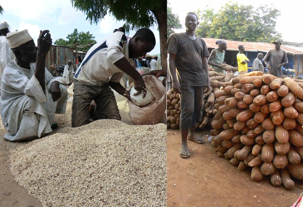 図2 地域の人々の食生活を支えるササゲ(左)とヤム(右)(ナイジェリア)