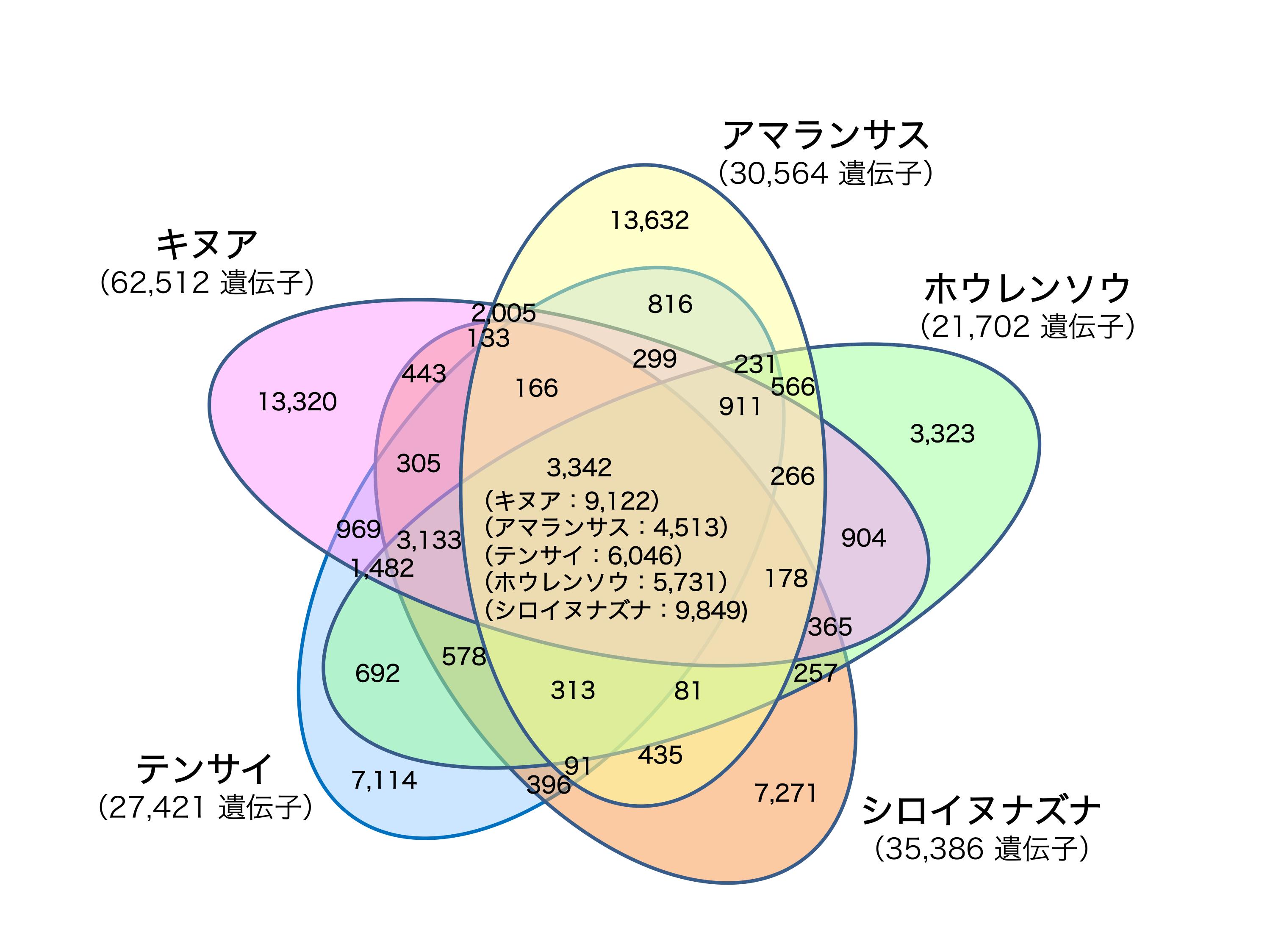 図2. キヌア遺伝子の近縁種などとの比較