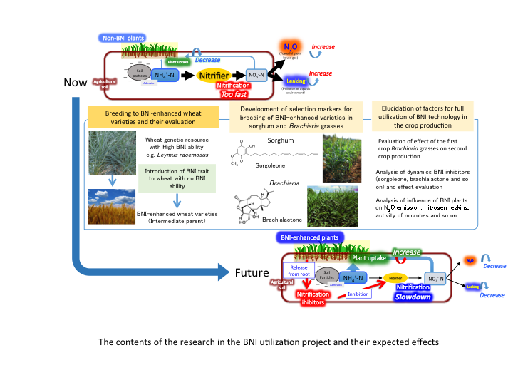 The contents of the research in the BNI utilization project and their expected effects