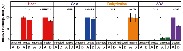 Fig. 1. Transcriptional activity of the optimal HS-inducible synthetic promoter.