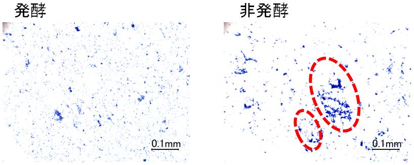 図3 米麺中のタンパク質の局在
