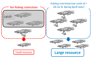 Fig. 4. Images showing the effects of unrestricted and restricted fishing