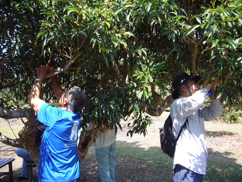 黙々と取り木を練習する市民
