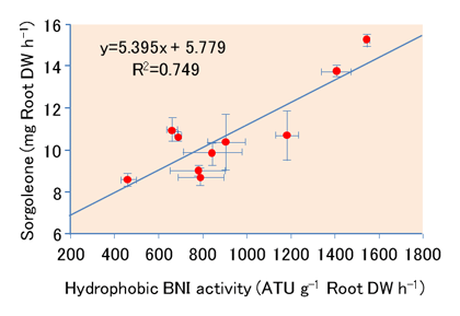 Fig. 1. Relationship between hydrophobic-BNI activity and sorgoleone levels