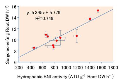 Fig. 1. Relationship between hydrophobic-BNI activity and sorgoleone levels
