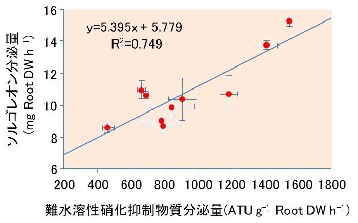 図1 ソルガムの根での難水溶性硝化抑制物質分泌量とソルゴレオン分泌量との関係