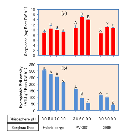 Fig. 2. Rhizosphere pH influence on the release of sorgoleone (a) and hydrophilic nitrification inhibitors (b) from sorghum roots, respectively