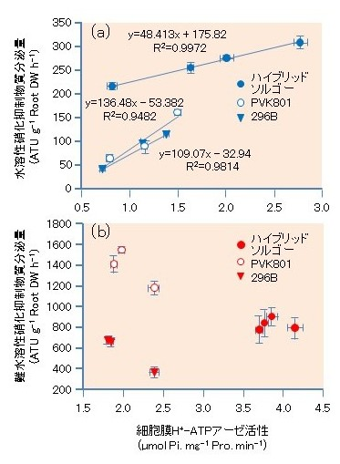 図3 ソルガム3系統(ハイブリッドソルゴー、PVK801、296B)の根での細胞膜H+-ATPアーゼ活性と水溶性硝化抑制物質(a)あるいは難水溶性硝化抑制物質(b)のそれぞれの分泌との関係