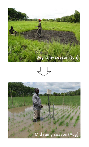 Fig.1. Natural flooding during rainy season n the floodplain ecosystem of Volta river (near L 1)