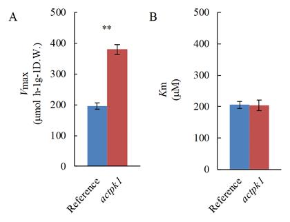 Fig. 1. Kinetic properties of HAT in actpk1 mutant.