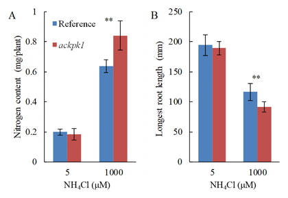 Fig. 2. Total nitrogen content (A) and longest root length (B).