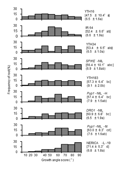 Fig. 2. Root angle distributions in IR 64 and eight accessions with the IR 64 genetic background were investigated using the seedling tray method.