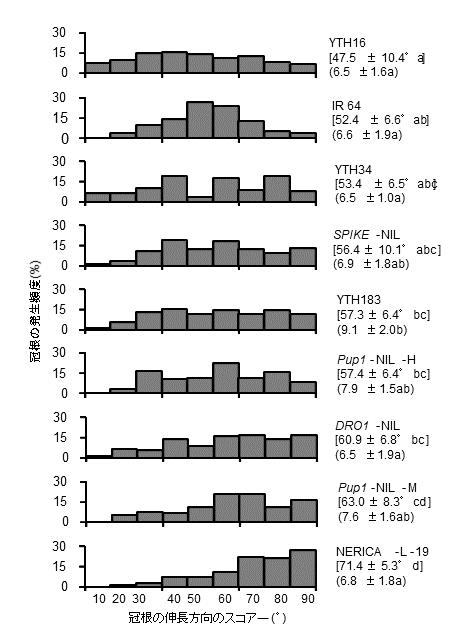 図2 播種箱法を用いたIR 64およびIR 64の遺伝的背景をもつ8系統の根系分布