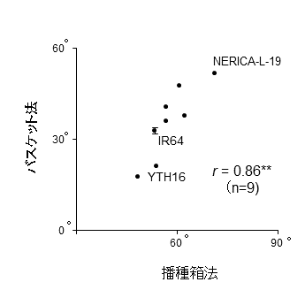 図3 播種箱法とバスケット法との伸張角度の関係