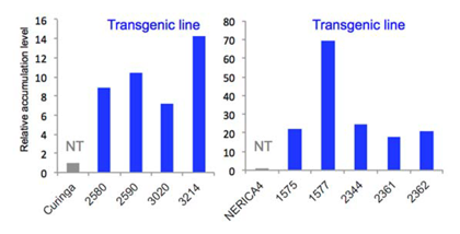Fig. 1. Accumulation of galactinol in transgenic lines for AtGolS2. Numbers indicate ID for each transgenic line. NT, non-transgenic plants.