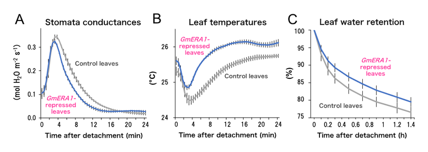 Fig. 1.	Improved drought stress responses in GmERA1-repressed soybean leaves