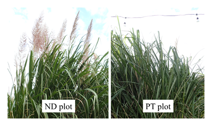 Fig. 2. Heading of JW4 in ND and PT plot.