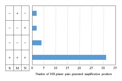 Fig. 3. Application of 39 SSR primer pairs to the Saccharum complex.