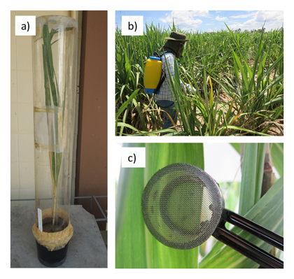 Fig. 1. Greenhouse (indoor) and field (outdoor) testing methods.
