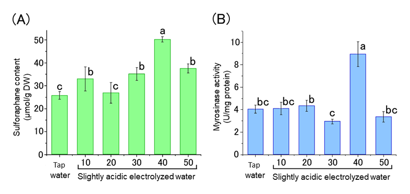 Fig. 2. Sulforaphane content (A) and myrosinase activity (B) of broccoli sprouts treated with different available chlorine concentrations of slightly acidic electrolyzed water.