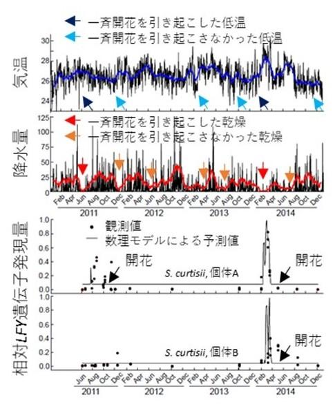 図2 観測期間中の気温、降水量データおよび開花遺伝子の発現量