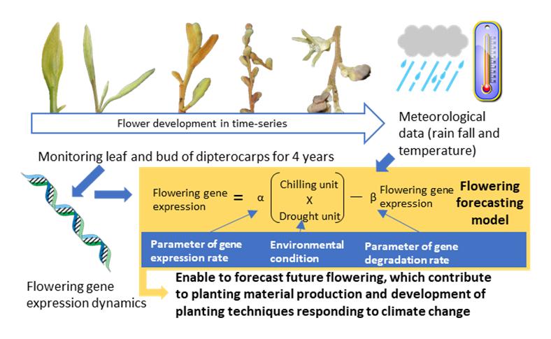 Fig. 3. Method for developing the flowering forecasting model