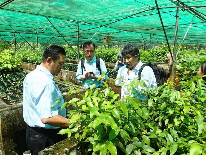 写真8 レタン種子・苗木生産センター・苗畑の視察