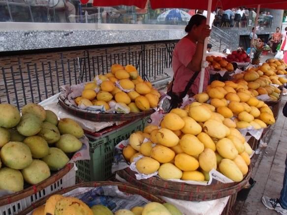 """写真1. ミャンマーの市場に並ぶマンゴー主要品種""""Sein Ta Lone"""""""