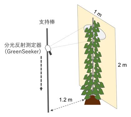 図1 支柱栽培ヤムの分光反射測定手法