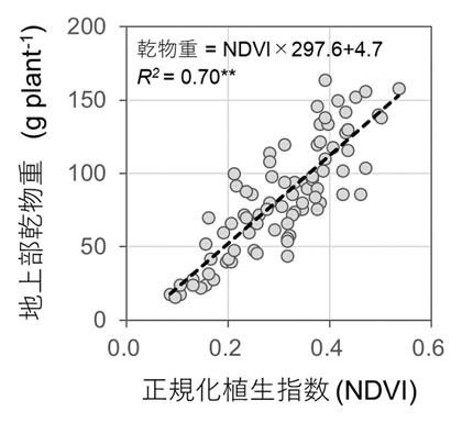 図2 NDVIによるヤム地上部乾物重の推定
