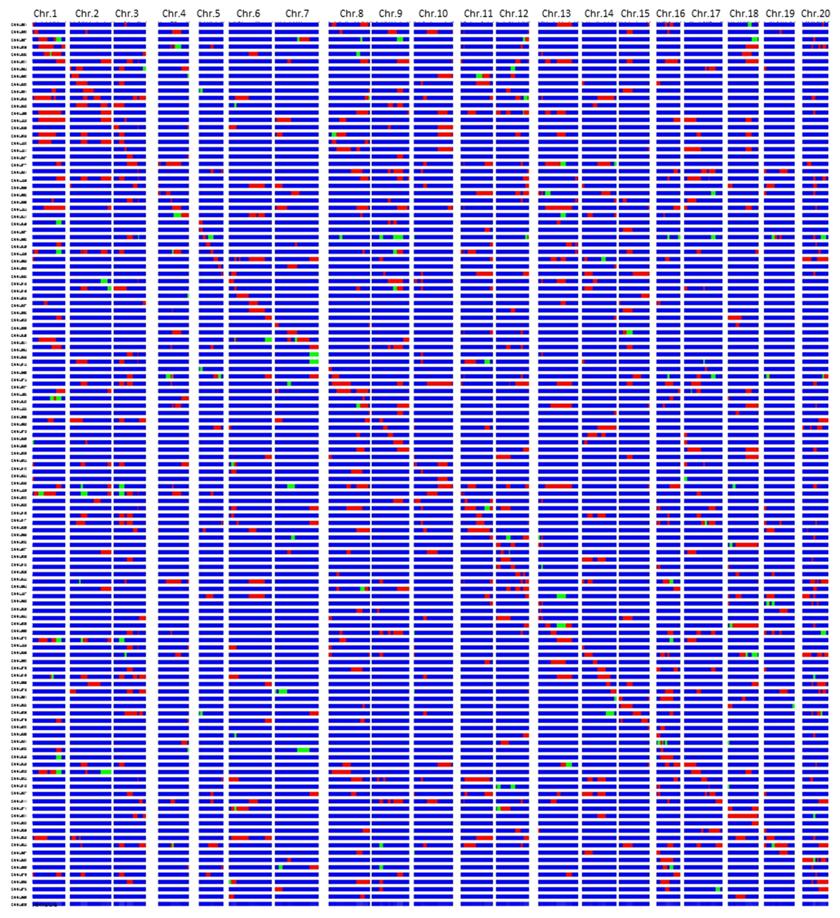 図1 栽培ダイズ品種「Jackson」と野生ダイズ系統「JWS156-1」交雑に由来する120のBC3F5染色体断片置換系統群(CSSLs) の遺伝子型