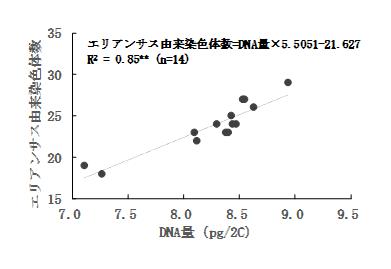 図3 DNA量とエリアンサス由来染色体数
