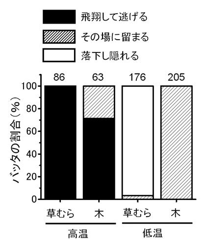 図4 成虫の逃避行動に及ぼす植物と気温の影響