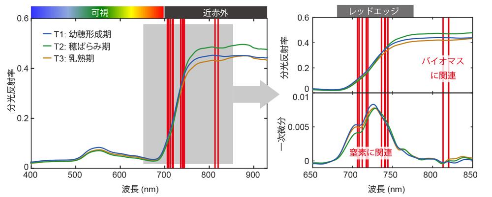 図3 地上分光データと穂ばらみ期(T2)のPLS回帰分析で選択された波長(赤線)
