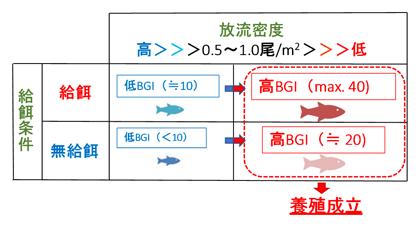 図4 放流密度および給餌の有無が養魚生産性(BGI)に与える影響のイメージ図