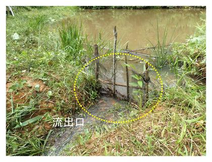 図2 養魚用ため池(B2)の様子