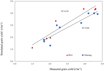 Fig. 2. Accuracy of ORYZA for predicting grain yields at different sowing dates Red triangle: IR64, Blue square: Ciherang, each point represents its sowing date