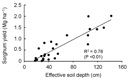 Fig. 3. Relationship between sorghum yield and effective soil depth (d in Fig. 1)