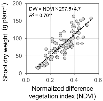 Fig. 2. Correlation between NDVI and observed shoot biomass.