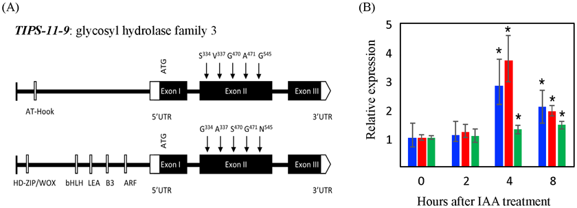 Fig. 2. Characterization of candidate gene TIPS-11-9 for lateral root development at qTIPS-11.