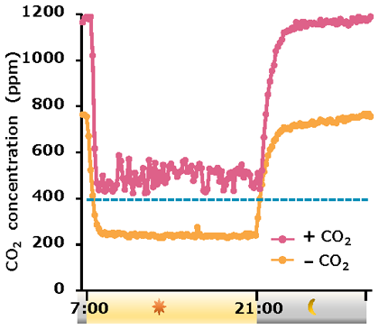 Fig 2. The internal CO2 concentrations within growth chambers containing soybean plants are decreased during light periods.