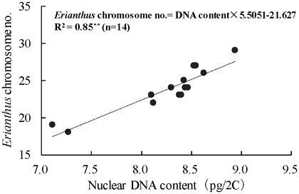 Fig. 3. Correlation between the nuclear DNA content and Erianthus chromosome number in intergeneric hybrids