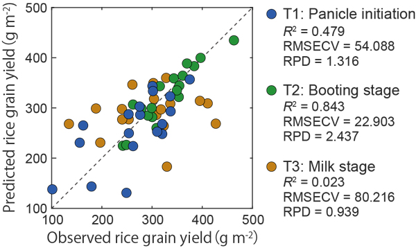 Fig. 2. Observed and predicted values of rice grain yield using PLS regression for datasets T1, T2, and T3 (n = 18).