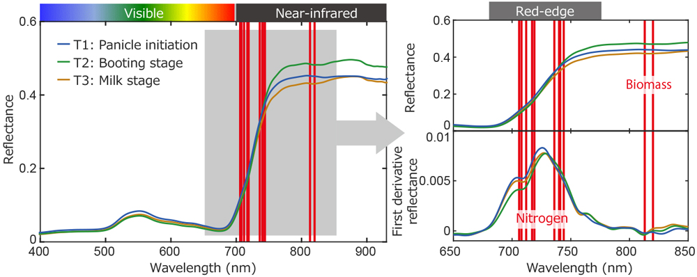 Fig. 3. Canopy reflectance and selected wavebands (red bars) in the ISE-PLS model for booting stage (T2).