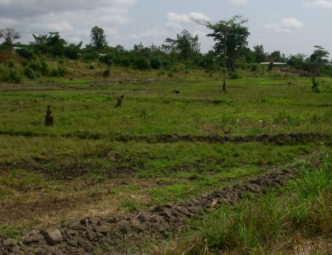 実証試験サイトに造成された畦のある水田圃場(クマシ近郊、ガーナ)