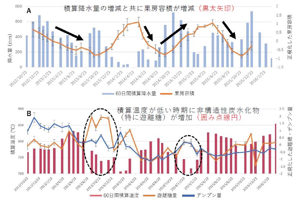 図1.観測期間中の60日間積算降水量パーム果房の容積の推移(A)と60日間積算温度と幹中の遊離糖とデンプン量の変動(B)。