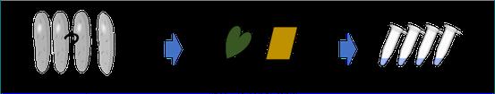 Step 2 diagram