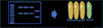 Step 4 diagram