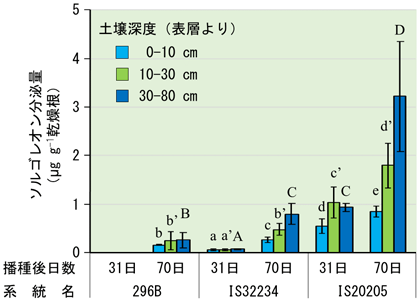 図2 窒素肥料施用下で栽培したソルガムの根からの土壌深度ごとのソルゴレオン分泌量